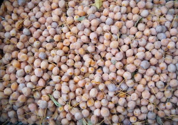 Ginkgo biloba 100 seeds