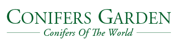 Conifers Garden - Online Tree Nursery
